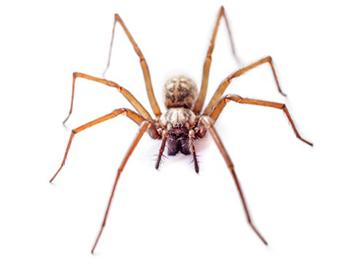 Pest Now Spiders