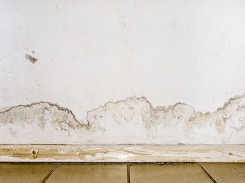 Pest Now Fixes water damage services
